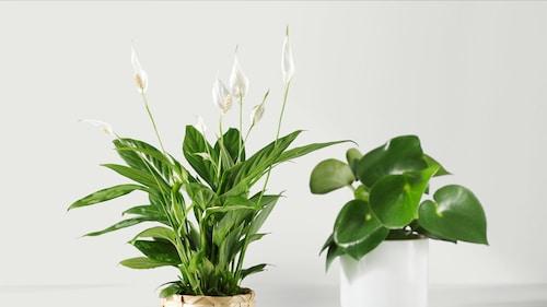人造植物和人造花