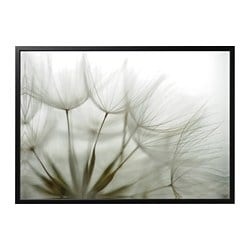 BJÖRKSTA picture with frame, Dandelion, black