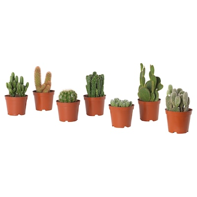 CACTACEAE Potted plant, cactus/assorted, 9 cm