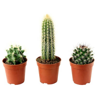 CACTACEAE Potted plant, cactus/assorted, 6 cm
