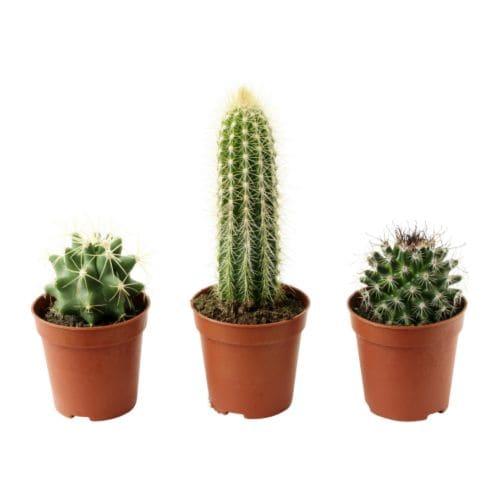 Cactaceae potted plant ikea - Ikea plantes vertes ...