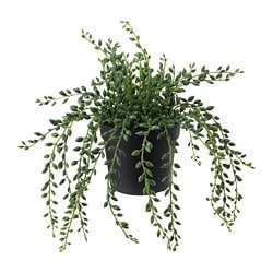 FEJKA artificial potted plant, in/outdoor String of beads