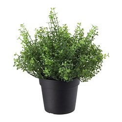 FEJKA artificial potted plant, in/outdoor Baby's tears