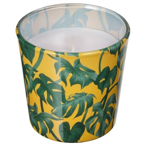 阿夫朗 无香味蜡烛和玻璃蜡烛杯 龟背竹/叶子 绿色 7.5 厘米 8 厘米 25 小时