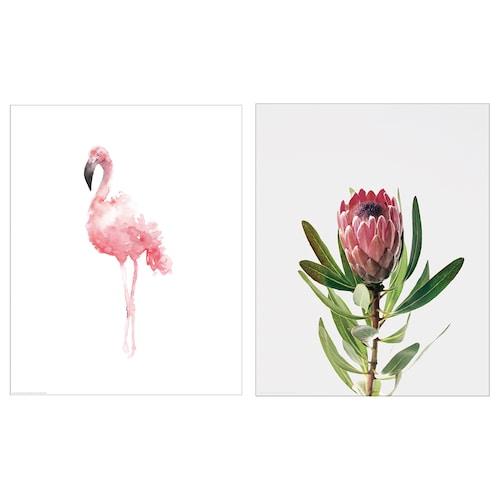 拜尔德 图片 粉红火烈鸟 40 厘米 50 厘米 2 件