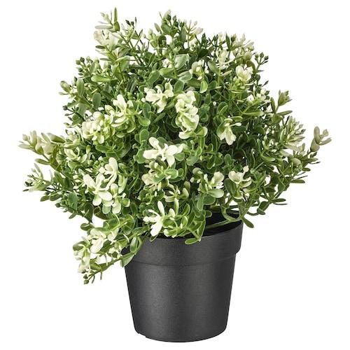 菲卡 人造盆栽植物 百里香 9 厘米 22 厘米