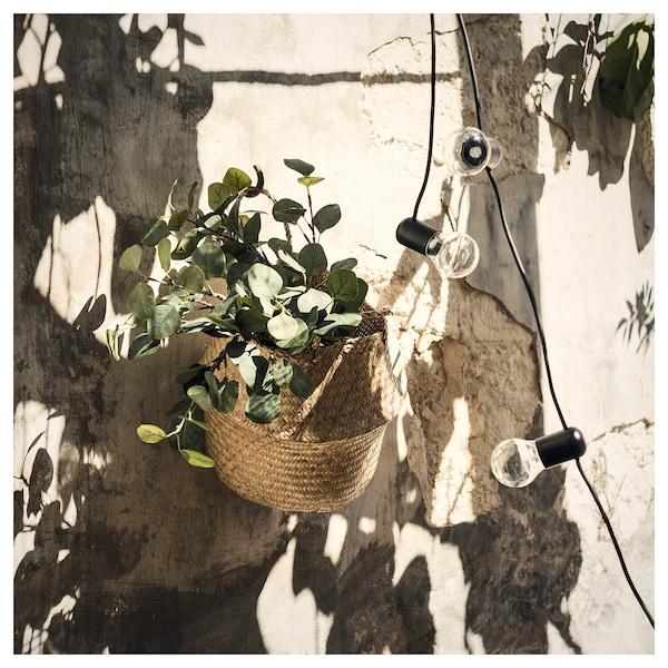思米加 人造枝叶, 桉树/绿色, 65 厘米