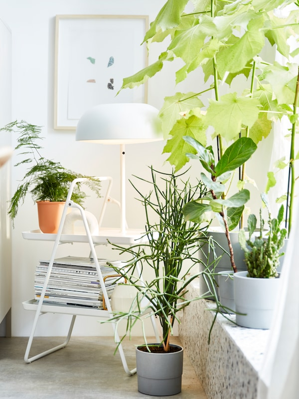 Plants in four grey, NYPON plant pots of different sizes on a windowsill, one on the floor, a white plant stand behind.
