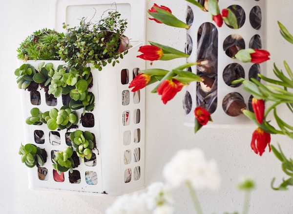 A close-up image of VARIERA plastic bag dispensers hung on the wall and used to grow flowers and bulbs.