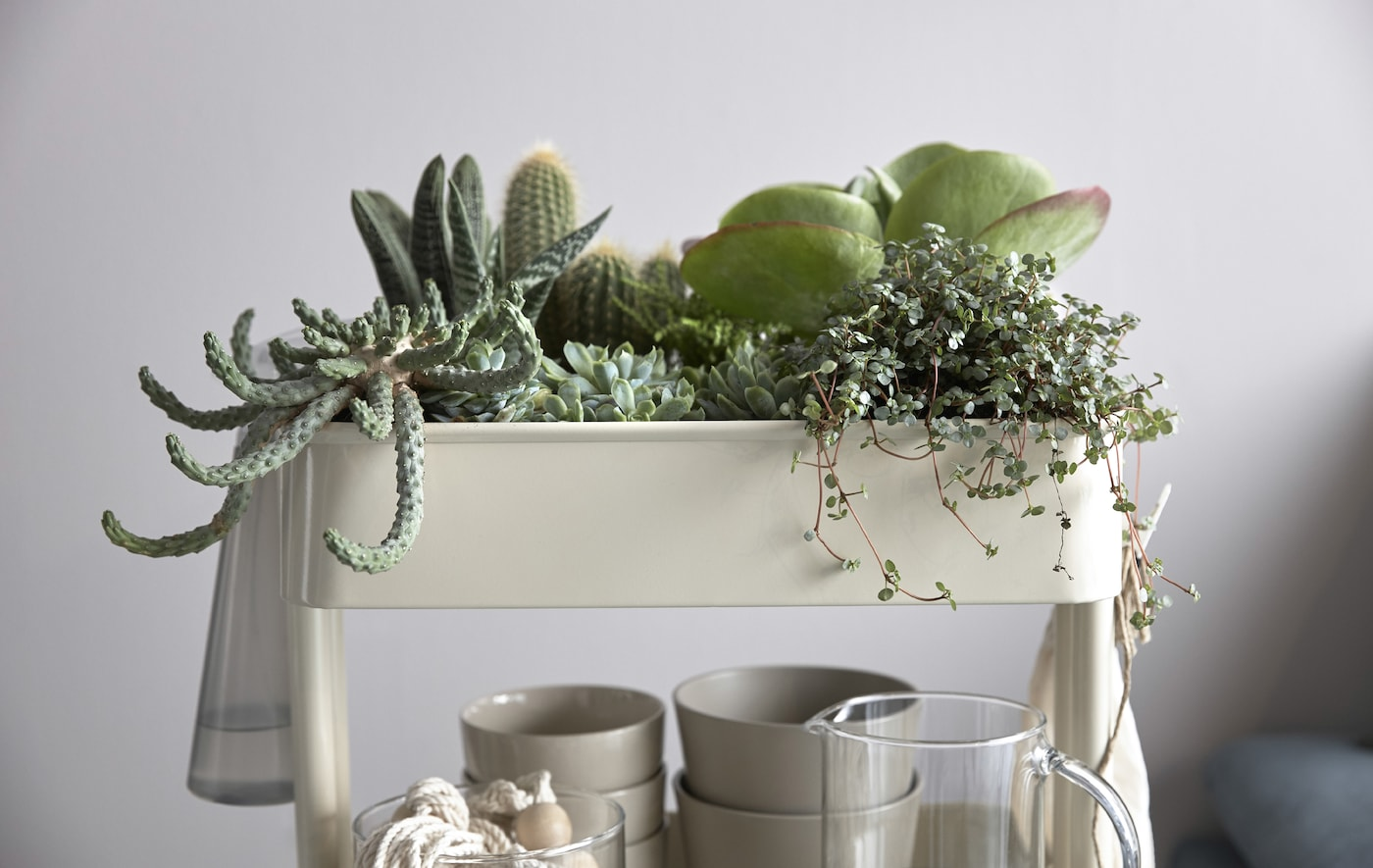A close-up of RÅSKOG trolley being used as an indoor garden filled with succulents and cactus.