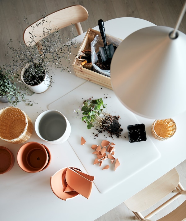 A gardening station set up on a kitchen table. On a SKVALLRA desk pad lie a potless plant in its soil and plant-pot shards.