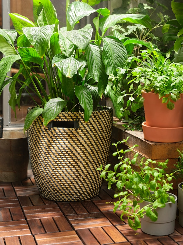 A large plant in a RÅGKORN plant pot on RUNNEN wooden floor decking and smaller plants at different heights.