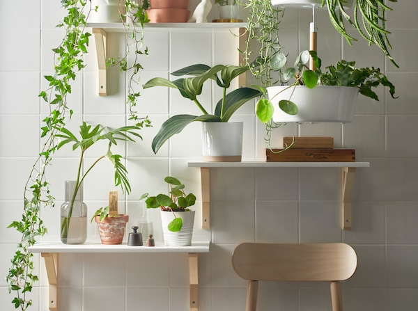 A plant wall with three shelves at different heights and a white hanging planter filled with green plants.