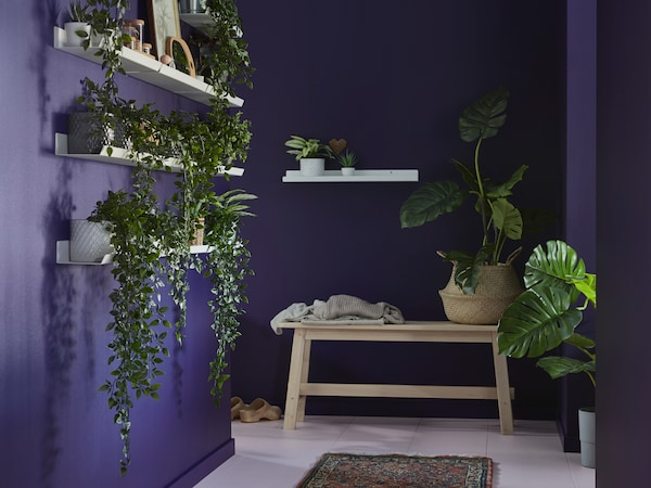A room with purple walls, with wooden benches and white shelves containing FEJKA artificial potted plants in pots.