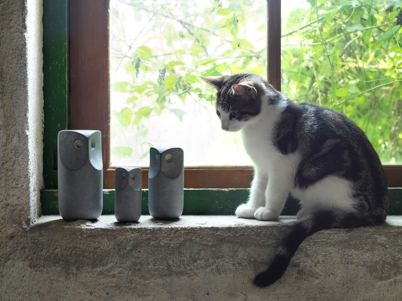 A small white and grey cat sits on a windowsill and looks at three grey TONAD decorative owls made of concrete.