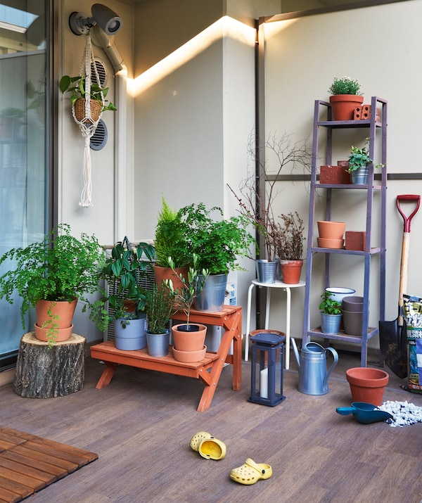 An outdoor area with wooden floor and pot plants on benches and shelves.