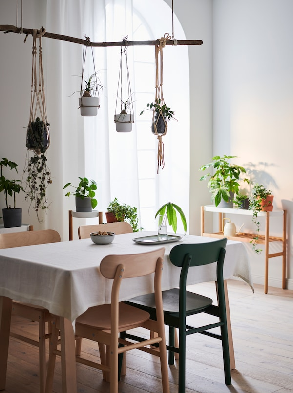 Apartment interior with table and chairs, a side table by a wall. Green plants on all surfaces and some hung above the table.