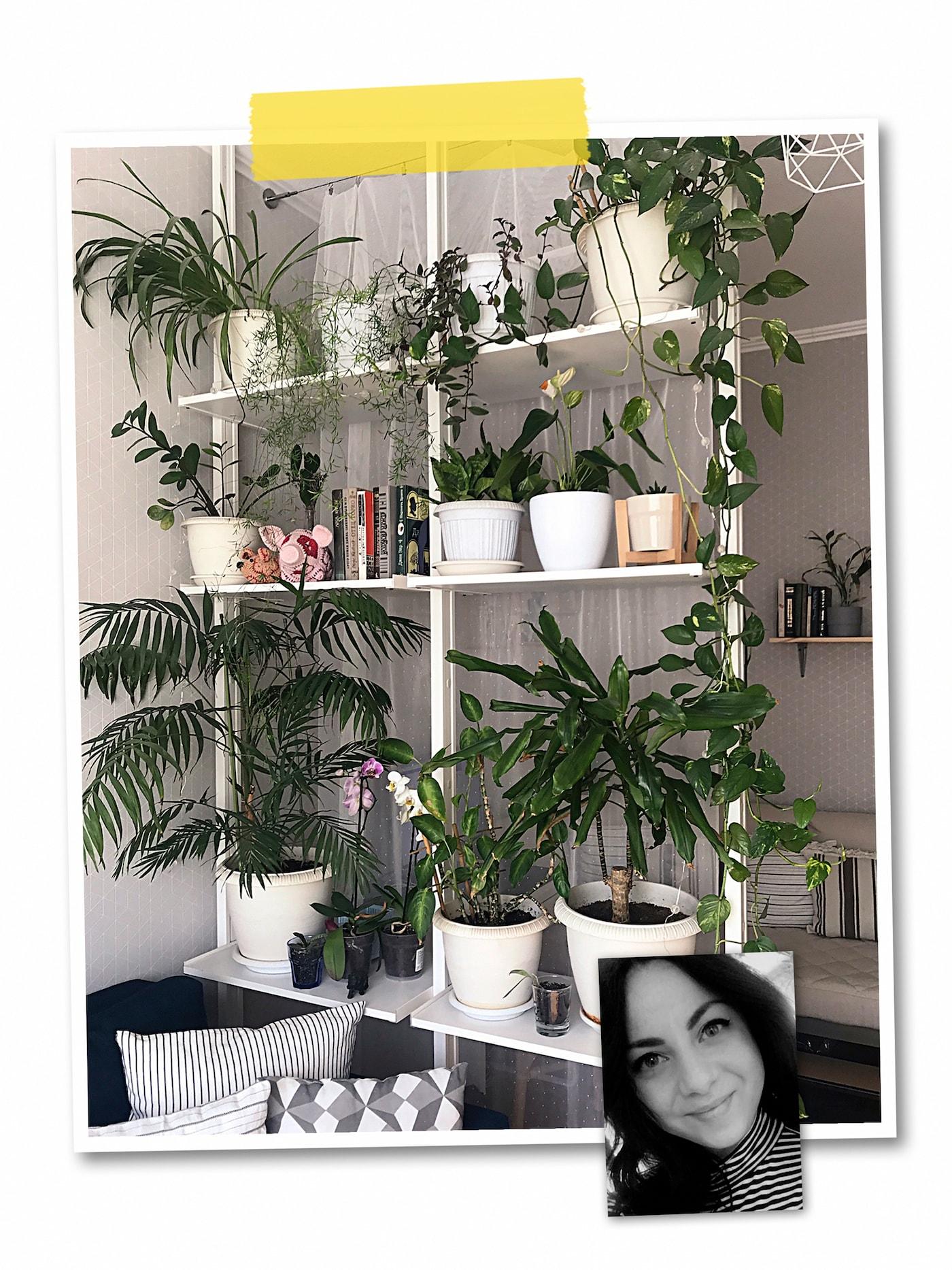 """两幅照片组成的拼图:一个用作房间隔板的""""顶天立地""""的ELVARLI 爱尔瓦丽 搁架单元,上面放有各式绿植,以及一位宜家员工的人像写真。"""