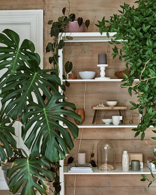 白色金属搁架单元上展示着各类植物、钟形容器、陶瓷和木雕器具。
