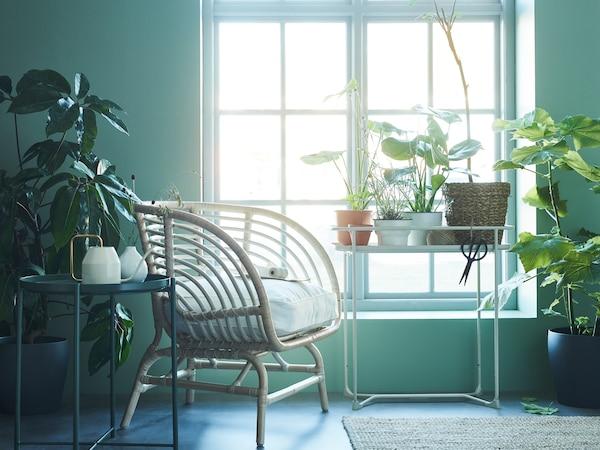 摆满绿植的房间里有一把藤椅和一个 KRYDDPEPPAR 克里派帕 植物架,明亮的光线透过窗户照射进来。