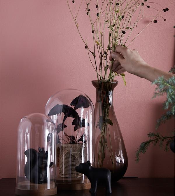 玻璃罩和花瓶里放着花朵和植物。