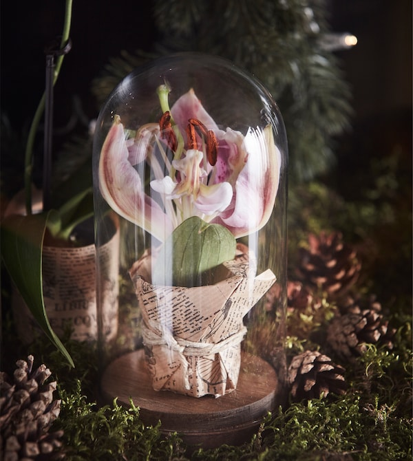 玻璃罩里放着一朵花。