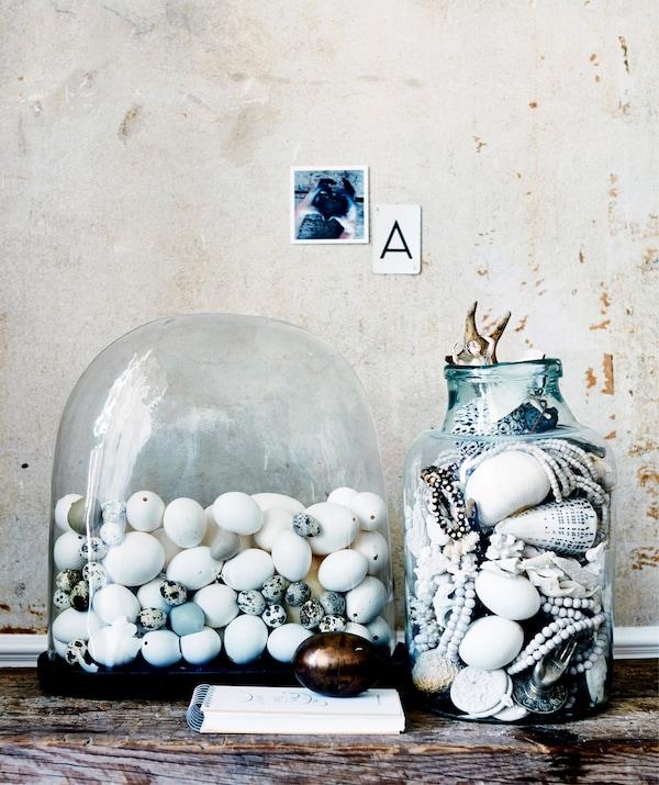 玻璃罩内摆放着一系列鸟蛋,玻璃瓶里摆放着贝壳。