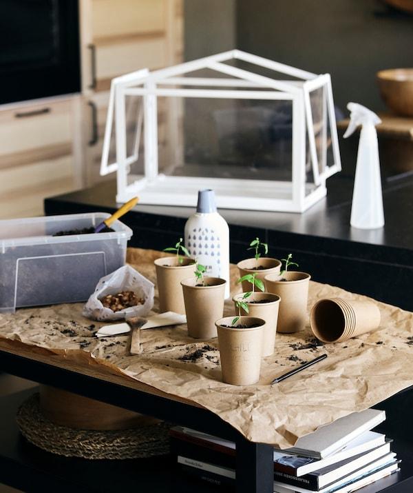 厨房里的花园小站:纸杯里种着幼苗,旁边是 TOMAT 多玛 洒水瓶和 SOCKER 索克尔 塑料制温室罩。