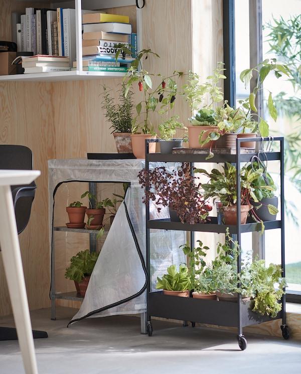 窗户旁边放置着一个带三块搁板的黑色附脚轮推车,上面摆放着花盆,花盆里种着香草和蔬菜。