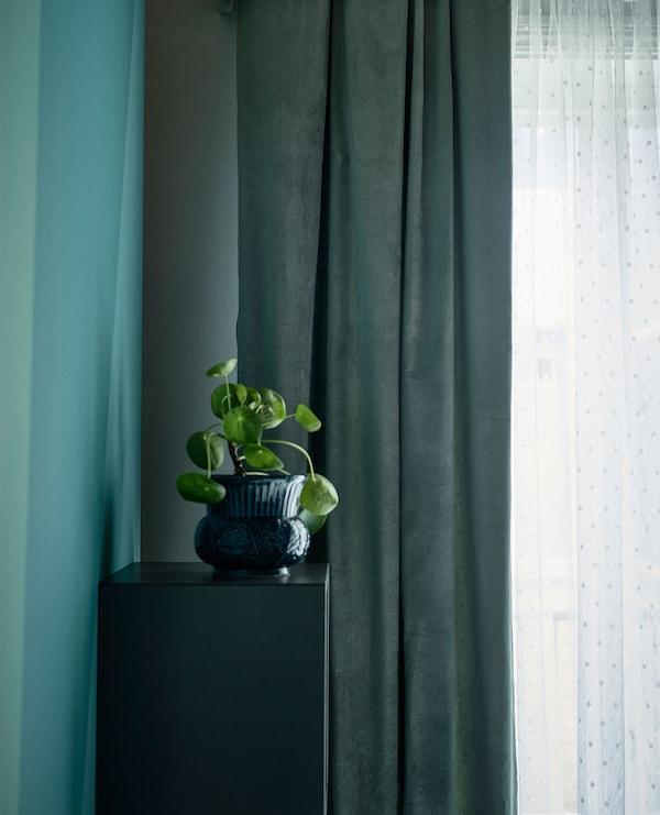 窗户旁悬挂的搁板上放着一株植物。
