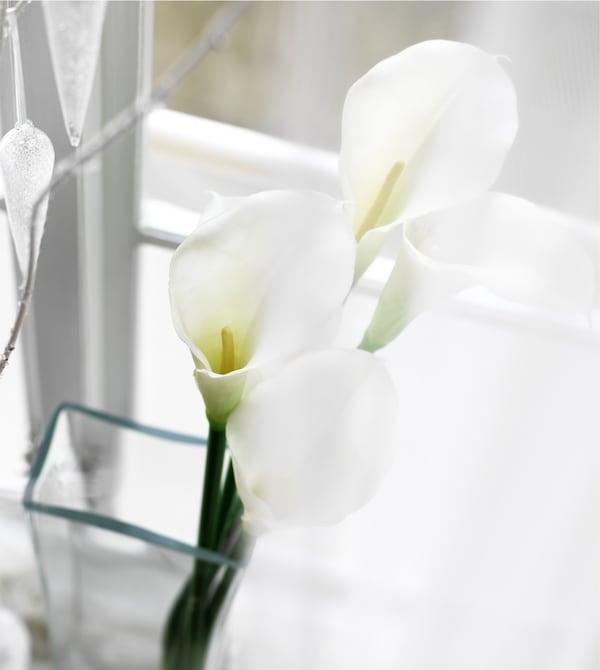 窗台上,马蹄莲静静地插在玻璃花瓶中。