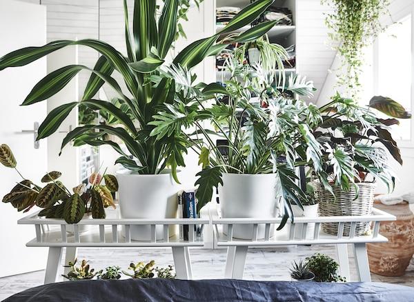 床末端的两张盆栽桌上摆满了植物。