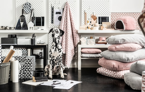 Dalmatian sitting upright surrounded by a great variety of colour-matched pet furniture, textiles and accessories.