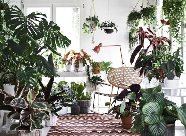 地毯、灯具和椅子,四周环绕着各种植物。