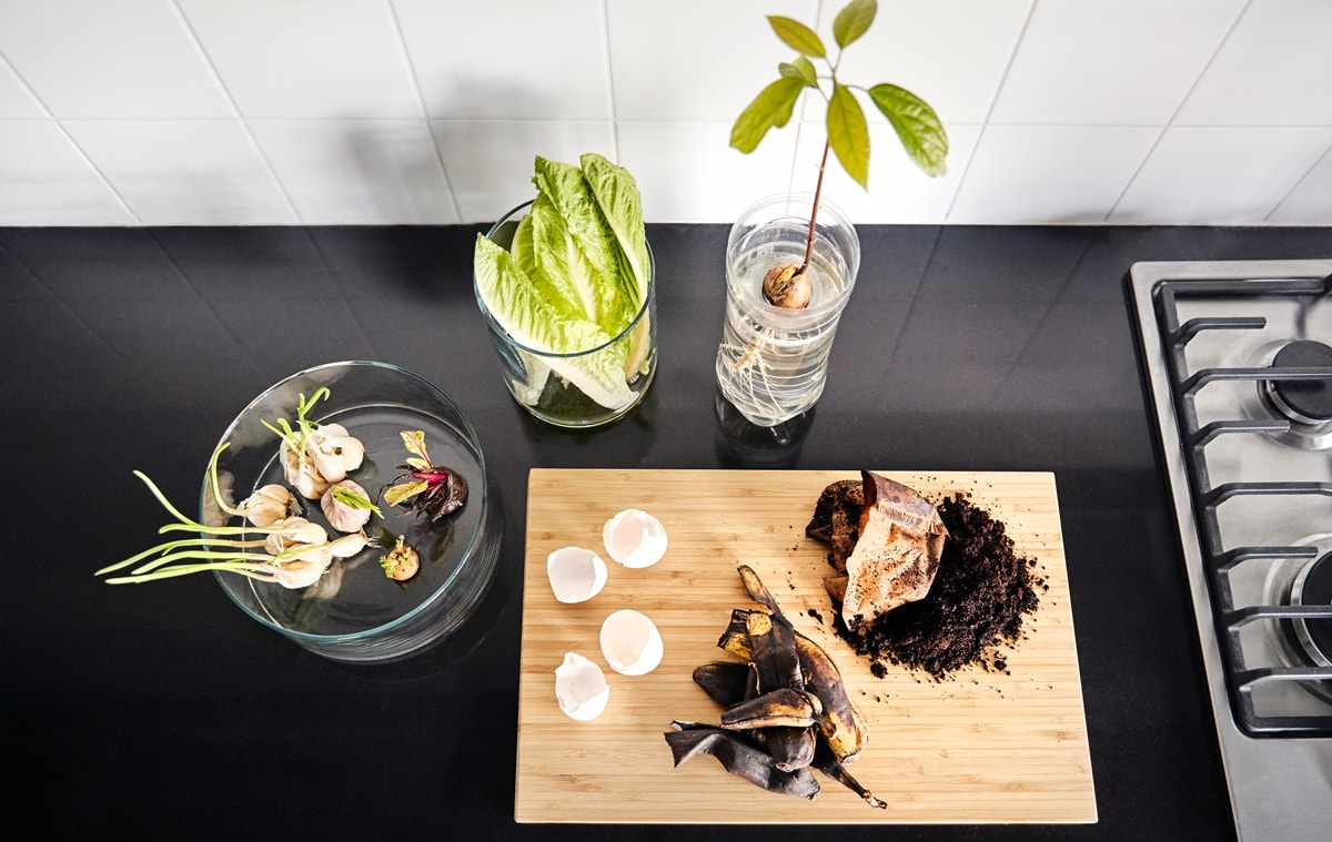 Egg shells and coffee grounds sit on a wooden chopping board besides sprouting garlic and onions sit in a glass cylinder, a wilting head of lettuce sits in a glass vase with some water, and an avocado seed is sprouting in a plastic container.