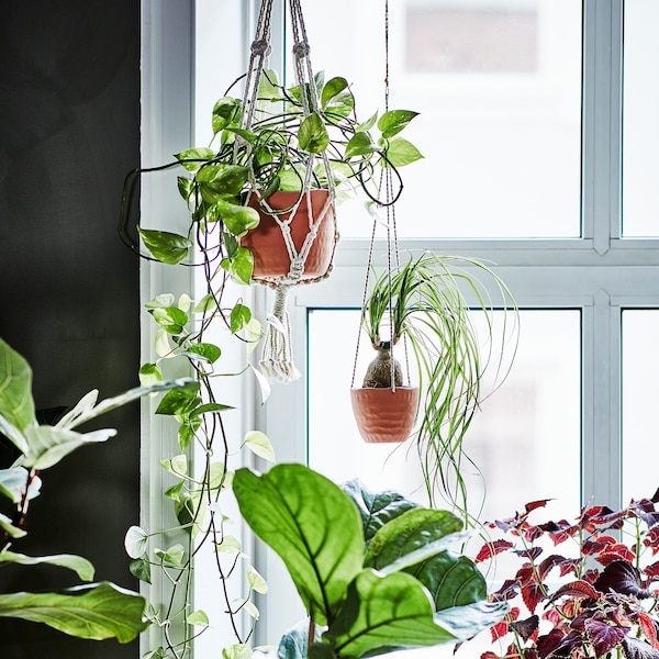 Four green plants in a bright window. One plant pot hanger of beige cotton and the other in clay ceramics.