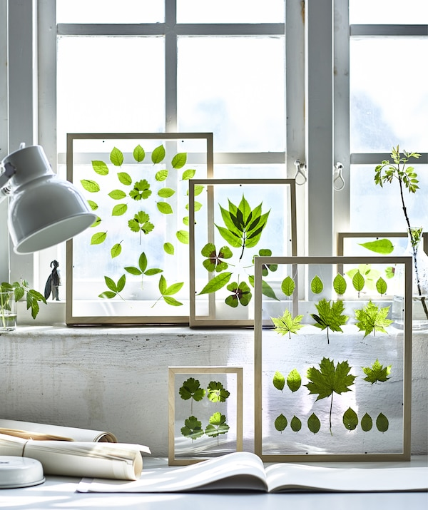 Frames containing pressed green leaves on a windowsill.