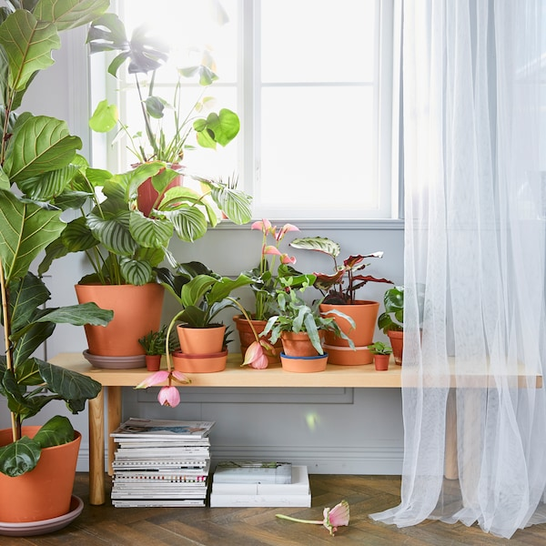 Get started with indoor plants.