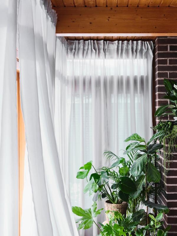 光线透过白色半透明GUNRID 古恩里德 窗帘洒入布满鲜活绿色植物的房间。