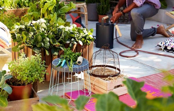 户外的水泥地面上立着一个大型木制栽培箱,里面种有植物,周围摆放着地毯、凳子和园艺工具。