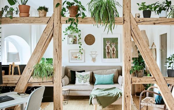 客厅里挂着图片的墙边摆着一张沙发,沙发上是一些绿色靠垫。A型框架木梁和植物隔出了一片工作空间。