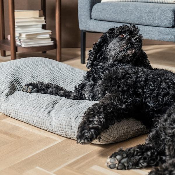 客厅里,一只狗一半身子躺在宠物睡垫上,一半身子躺在地板上。背景是放着一堆书的边桌和扶手椅。