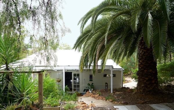 林区中的一幢单层白色房屋,旁边有一棵硕大的棕榈树。