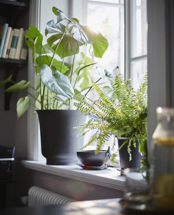 Plants actually help concentration while you're working.