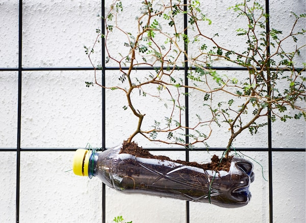 Plastic soda bottles are attached to wire trellises with wire and filled with soil to grow plants.