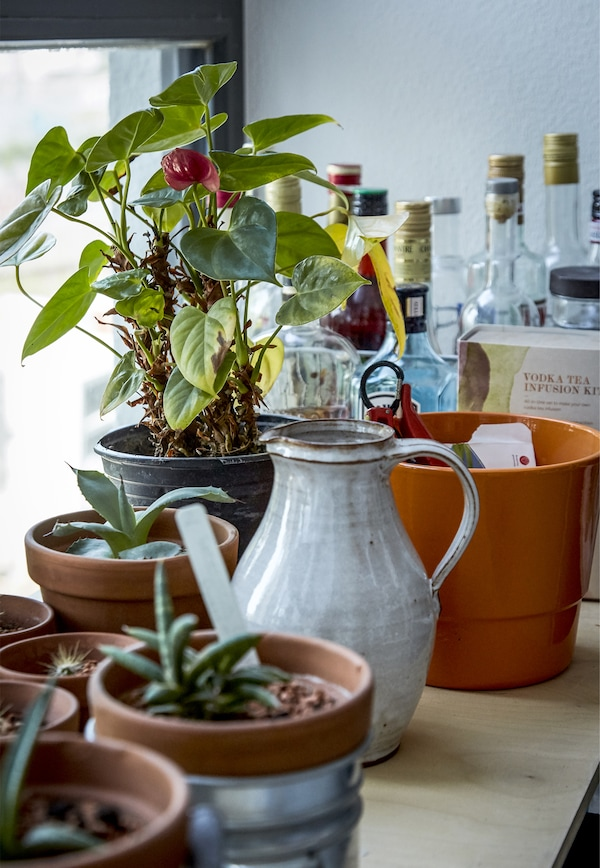 Pot plants and a jug on a windowsill.