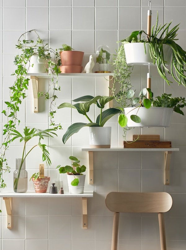 墙上不同高度的三块搁板摆满了各种植物,还有一个白色的BITTERGURKA 比古卡 悬挂花篮。