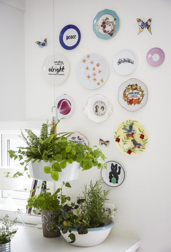 墙上的一些彩色盘子和植物。