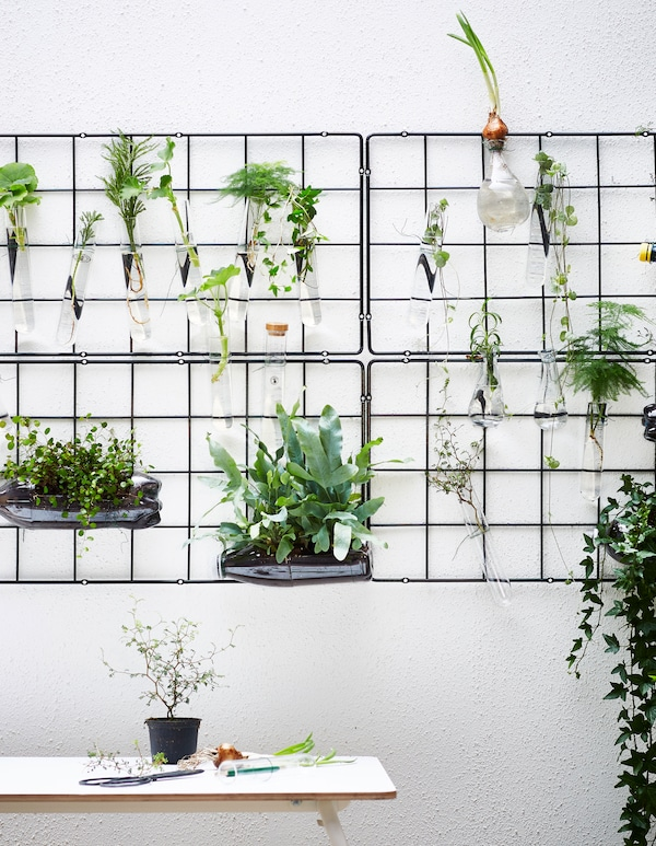 Several wire trellises are hung on a wall and display plants in small glass vessels