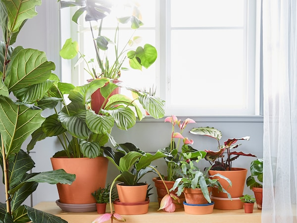 Stories to help with getting a little greenery into your life.